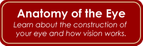 Anatomy of the Eye - Learn about the construction of your eye and how vision works.